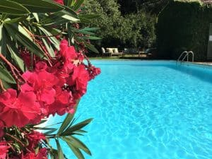 Swimming pool in a luxurious garden
